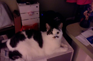 Good kitty or bad kitty?